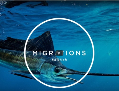 "New ""Migrations"" video hits the airways with Accurate Reels."